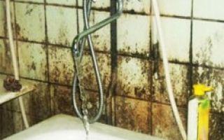 Что делать, если в ванной — плесень