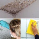 антигрибковая обработка в ванной